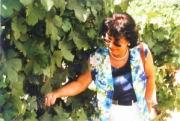 Weinland in Südafrika