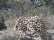 Überladener Esel