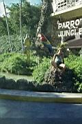 Parrot-Jungle