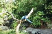Ein schöner Papagei